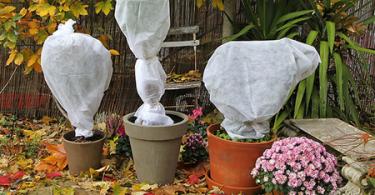 Protéger ses plantes en pot contre le gel