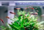 Importance des distributeurs de nourriture automatique pour aquariums